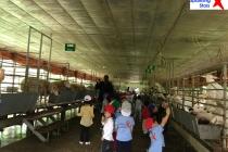Trang trại Dê trắng Farm - Ba vì